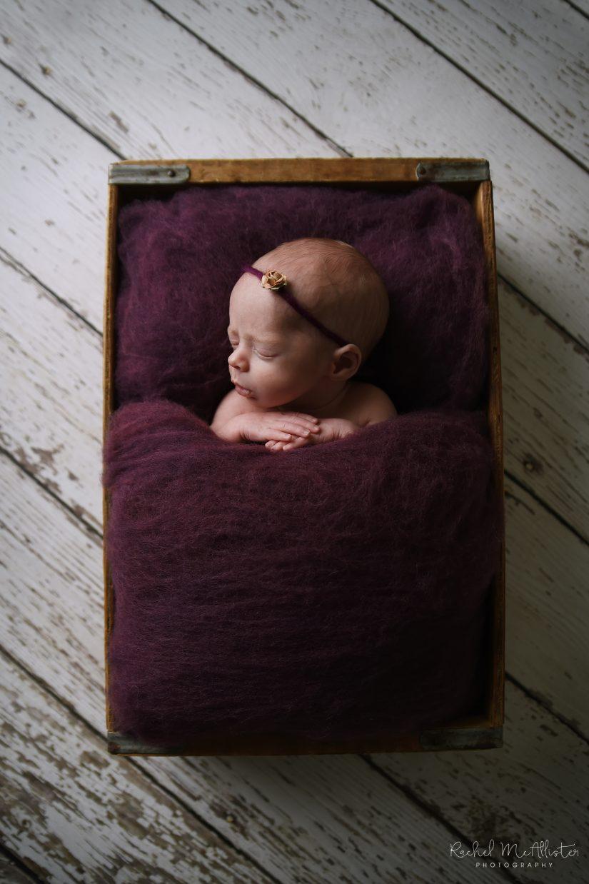 Wietfeld Newborn